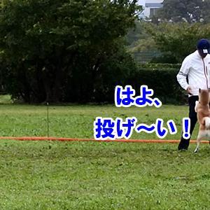 ぽつんと1テント Ver.1(Plyz編)2