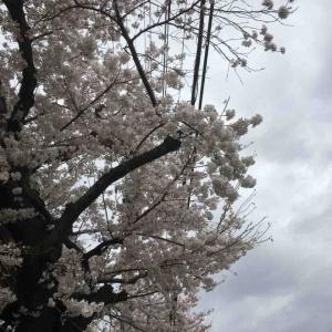 花の雨ほのかに灯るカフェの窓  柴田南海子