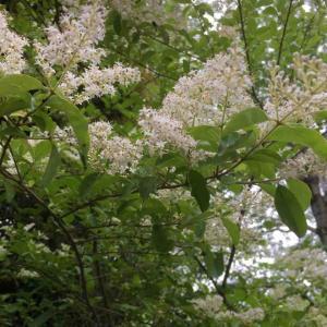 鶯(うぐいす)を山へ返して春はゆく 宮沢 映