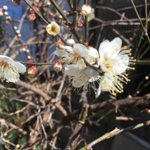 初夏の風受けて水辺の葦(あし)なびきもんしろ二つでこぼこに飛ぶ  多田郁子