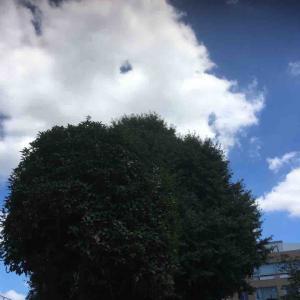 大きな木大きな木蔭夏休み 宇多喜代子