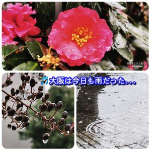 ♫大阪は今日も雨だった…