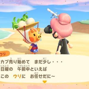 【どうぶつの森】ウリちゃん!カブくださいっ!【あつ森】