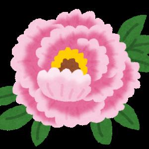 【名文紹介】色彩なしの花弁・デコレーションケーキの生クリームで作った花びら