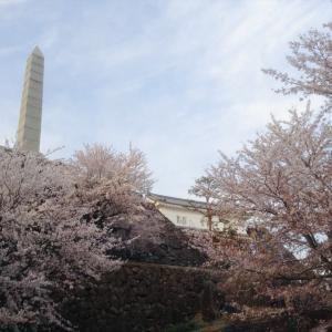 2020自粛の春に、やまなし桜リレー②  (写真でお花見)