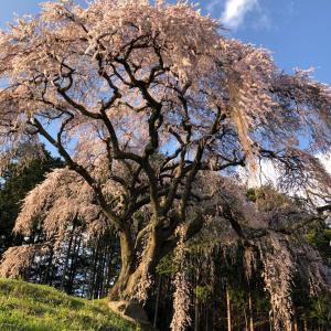 2020自粛の春に、やまなし桜リレー③ (写真でお花見)