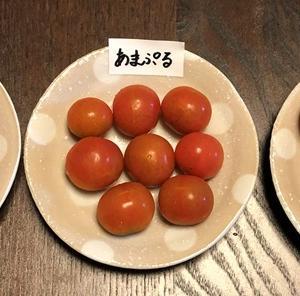 家庭菜園ミニトマト対決 プチぷよVSあまぷるVSうす肌トマト