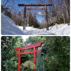神社の鳥居には違いがある!