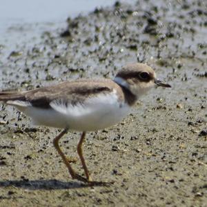 水辺の野鳥たち