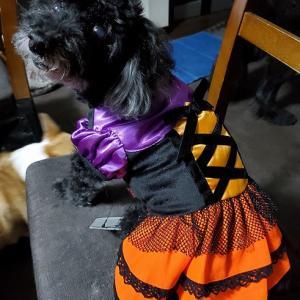 チェリーのハロウィンの服