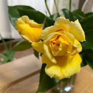 【引き寄せ】バラの花