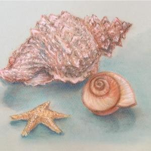 海の宝物*パステル画