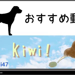 【おすすめ動画:ゾウたん】Madyeti47 Kiwi!