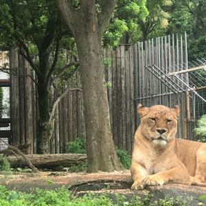 身近な動物園