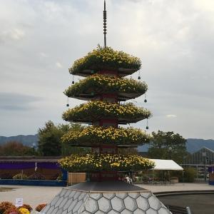 富山県の菊まつり