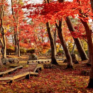 大仙公園の紅葉 見頃とライトアップについて