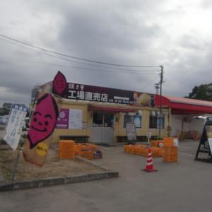 霞ヶ浦で100円芋掘り(´・ω`・)エッ?