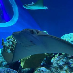 DMMかりゆし水族館は色々な生き物が間近で見られる水族館