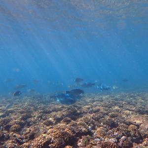 オリンパス Tough TG-6 レビュー 沖縄シュノーケリングで水中写真&動画撮影