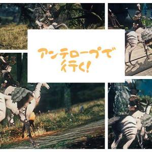 【FF14】アンテロープで行く! 東部森林を散歩しよう!