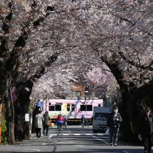 2020.3.24 上北沢駅前の桜並木より