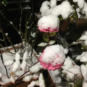ガーデンリフォーム2020/10月〜12月、九州も雪