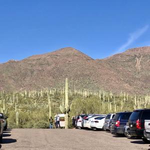 アリゾナに来たらたくさんのペトログリフとサワロ・キャクタスを見たい!:家族連れにも大人気のHieroglyphic Trail