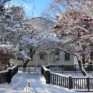 函館公園の美しすぎる雪紅葉