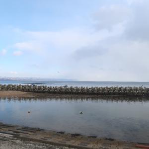 津軽海峡の海に孤高の白鳥
