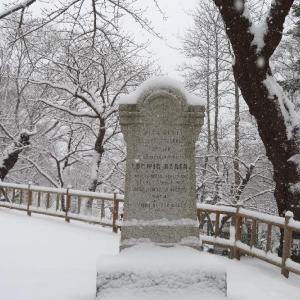 雪分補給! 白い花の咲く函館公園