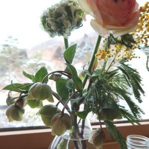 地物ラナンキュラスで、わが家の窓辺に春
