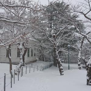 モノトーンの函館公園、雪の花