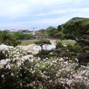 つつじ満開の函館公園で深呼吸
