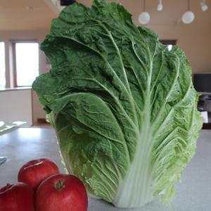 巨大白菜とさんさりんごのサラダ