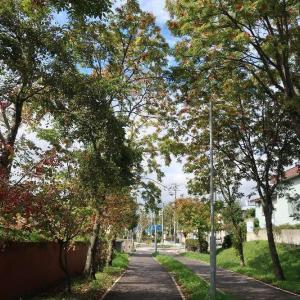 湯川町&深堀町を初ぶら探訪
