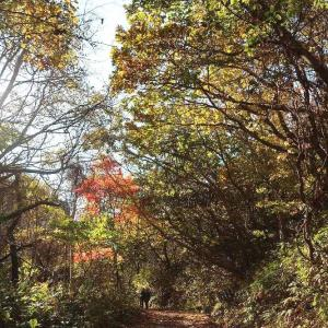 秋の函館山歩き、紅葉と要塞跡