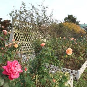 秋のイギリス領事館は秘密の花園