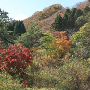 函館山のふもとの紅葉と雪劇場