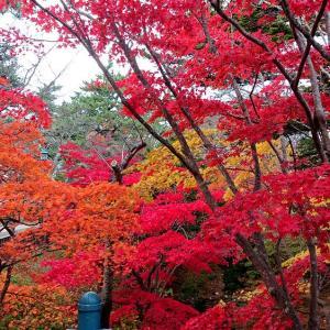 凄みさえ感じさせる函館公園の紅葉の谷