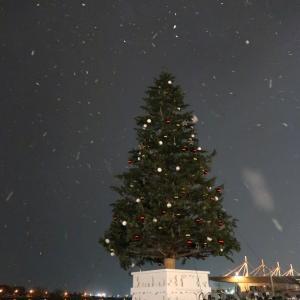 冬の始まり! 雪のクリスマスファンタジー