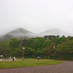 桜の季節がすぎ、しっとり海霧の季節へ