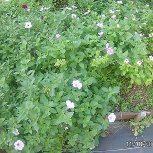 花壇の土作り