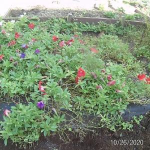 花壇の土を耕す