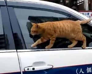 失敗をあざといポーズで誤魔化す猫