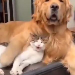 カップルみたいにいちゃつくネコとイッヌ