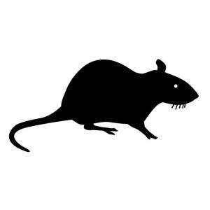 ネズミさん、人間をおちょくっていたことが判明