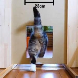 ネコさん、どんな隙間でも強引に通り抜けてしまう