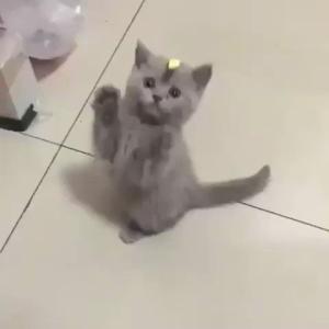 子猫「なんか頭にのってるニャ・・・」