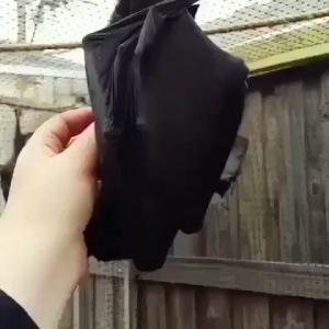 黒い傘??と思ったらまさかの・・・