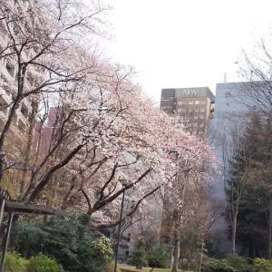 桜の季節に終わる私の花粉症